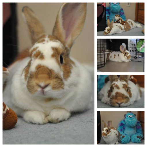 Bunnycollage