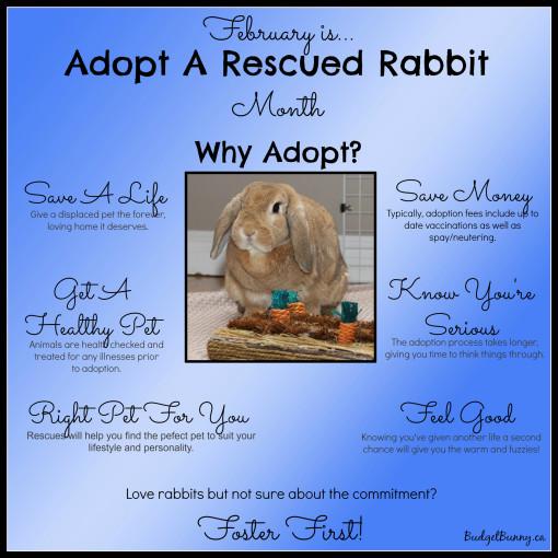 adoptdontshopFebruaryforweb