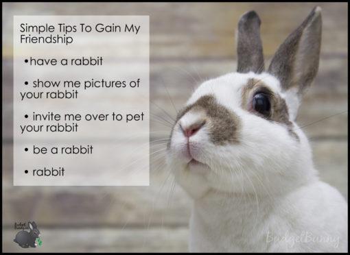 rabbitfriendship